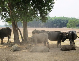 """Mời Nhật Bản """"giải cứu"""" Saigon Safari - công viên du lịch sinh thái tầm cỡ Đông Nam Á"""