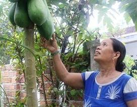 Hơn 20 tỉnh, thành phía Nam tìm đầu ra cho nông sản sạch