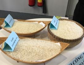 Xuất khẩu gạo lao đao: Ngôi vương còn xa (bài 1)