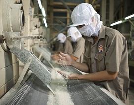 Xuất khẩu gạo lao đao: Tái cơ cấu hay là chết? (Bài 2)