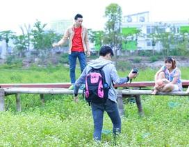 Hàng nghìn người tàn phá cánh đồng hoa tam giác mạch ở Hà Nội