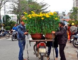 """Ngày Tết xe ôm """"kiếm bộn"""" nhờ... chở hoa, cây cảnh"""