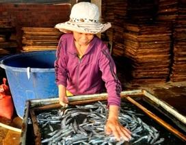 Làng chài giảm nghèo với nghề cá hấp