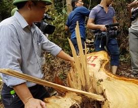 Quảng Nam báo cáo Thủ tướng vụ phá rừng pơmu