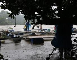 Vụ người nuôi cá bè thiệt hại nặng do xả lũ: Tại dân chủ quan?