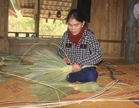 Quảng Trị: Người dân Vân Kiều đan chổi đót kiếm tiền sắm Tết