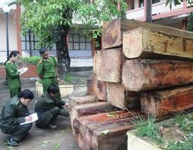 Phát hiện và thu giữ gần 15 m3 gỗ không rõ nguồn gốc