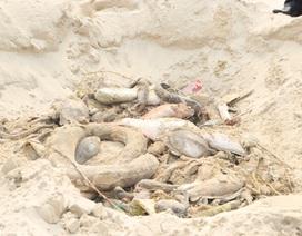 Kiên quyết xử lý hành vi gây ô nhiễm môi trường, làm chết cá