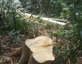 Khởi tố vụ án hủy hoại rừng đầu nguồn
