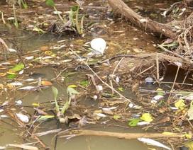 Kiểm tra mẫu nước sông Sa Lung để tìm nguyên nhân cá chết