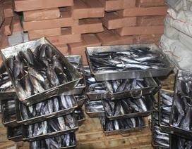 Chủ cơ sở đông lạnh chưa đồng ý tiêu hủy 20 tấn cá nhiễm phenol