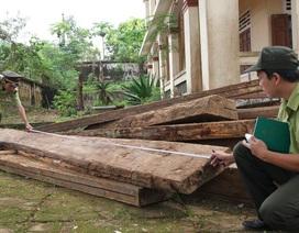 Phát hiện 6m3 gỗ xẻ phách bị khai thác trái phép