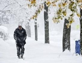 Miền đông bắc Mỹ chìm trong bão tuyết dữ dội, 7 người chết