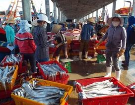 Trúng đậm cá hố, ngư dân thu lãi hàng trăm triệu đồng mỗi chuyến