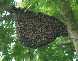 1 người chết, 13 người nhập viện nghi do ngộ độc sáp ong