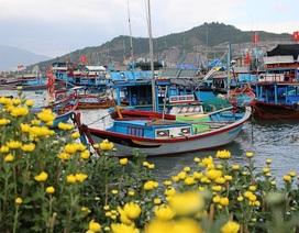 """Xuân """"đổ bộ"""" lên hòn đảo 3.000 dân trên Vịnh Nha Trang"""
