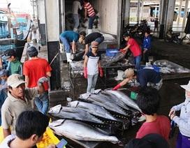 80% tàu đánh bắt cá ngừ đại dương bị thua lỗ