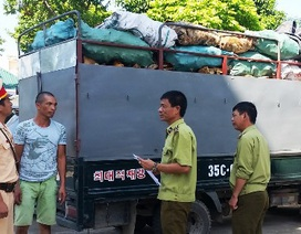 Phát hiện xe tải chở 3,6 tấn xương động vật hôi thối