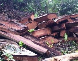 Khởi tố hình sự, triệu tập hàng loạt nghi can phá rừng