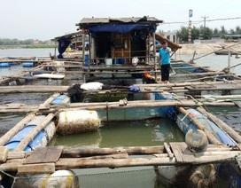 Hàm lượng Amoni trong nước sông Bạng vượt chuẩn gần 1.000 lần