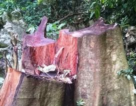 """Vụ rừng đặc dụng """"chảy máu"""": Lỗi lớn do chủ rừng?"""