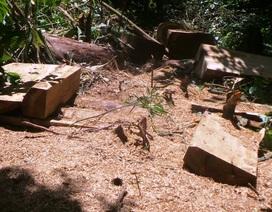"""Rừng đặc dụng """"chảy máu"""": An ninh rừng mất ổn định"""