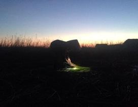 """Nắng như """"đổ lửa"""", nông dân ra đồng từ 2 giờ sáng"""
