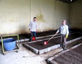 Rộ trào lưu trồng rau ban công với phân trùn quế