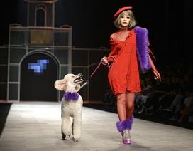 Chi Pu dắt… cún đi dạo trên sàn catwalk