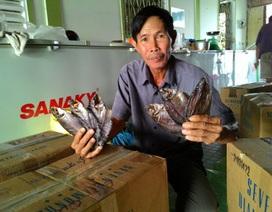 Lão nông đầu tiên nuôi cá bổi thu tiền tỷ đất Mũi - Cà Mau