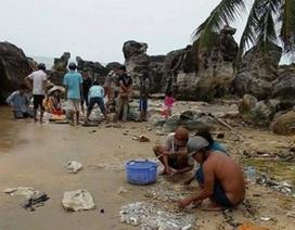 Khoảng 2 tấn hải sâm đã dạt vào bờ biển Phú Quốc