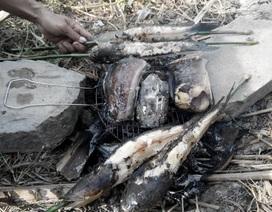 2 trẻ tử vong sau ăn cá lóc là do nhiễm độc thức ăn