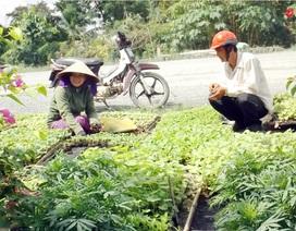 Kiếm tiền triệu mỗi ngày nhờ ươm cây giống bán Tết