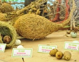 """Chiêm ngưỡng """"bảo tàng"""" trứng chim, cá đồng... ở Vườn Quốc gia Tràm Chim"""