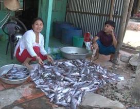 Cận Tết, cá chết bất thường, người dân trắng tay