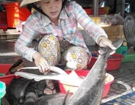 Gần 4.000 con cá bớp chết bất thường, thiệt hại tiền tỷ