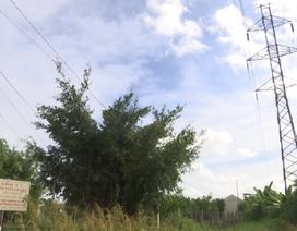 Trường mẫu giáo nằm lọt giữa 2 đường điện cao thế