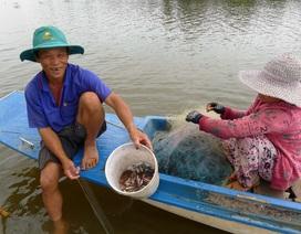 Hẩm hiu nghề câu lưới trong lũ muộn