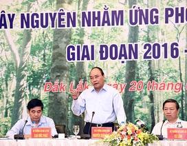 Thủ tướng: Xử nghiêm hành vi tiêu cực, bao che phá rừng