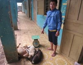 Vụ công an bị đâm chết: Đối tượng nằm viện là kẻ trộm chó