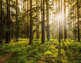 Có bao nhiêu cây trên hành tinh xanh của chúng ta?