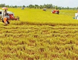 """FDI ồ ạt đổ vào nền kinh tế, nông nghiệp vẫn chỉ """"chầu rìa"""""""