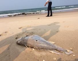 Phó Thủ tướng yêu cầu điều tra làm rõ nguyên nhân cá chết hàng loạt