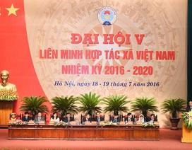 Sau trúng cử Đại biểu Quốc hội khoá XIV, ông Võ Kim Cự tái đắc cử Chủ tịch Liên minh Hợp tác xã