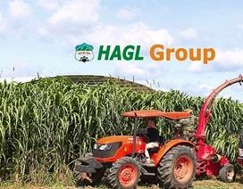 """Cổ phiếu vừa được """"giải cứu"""", công ty nông nghiệp của bầu Đức lại tung tin xấu"""