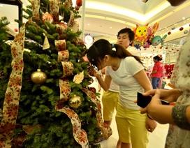 Độc đáo cây thông Noel thật được nhập về từ Mỹ