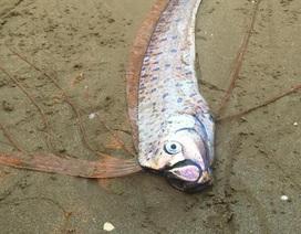 Người dân phát hiện cá lạ giống rồng chết dạt vào bờ biển