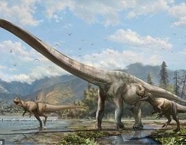 Tìm thấy xương khủng long cổ dài ở Trung Quốc