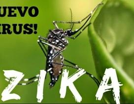 Dịch do Zika gây viêm não nhỏ truyền qua muỗi sốt xuất huyết