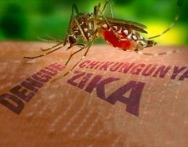 Chính phủ yêu cầu chủ động phòng, chống dịch bệnh do vi rút Zika